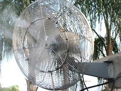 misting fans vs misting system - Misting Fan